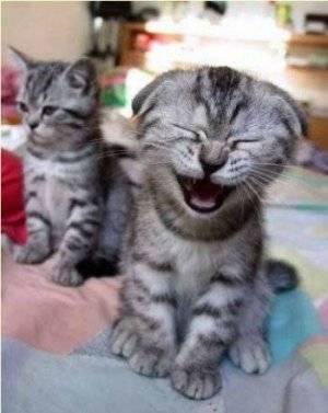 kitten-pictures-51.jpg